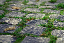 A Row Of Bright Green Grass Between The Granite Pavers And Dry Yellow Leaves In The Old Part Of The City. Photo Of The Paving Stones In Bright Morning Light, Together With Dry Leaves Close-up.