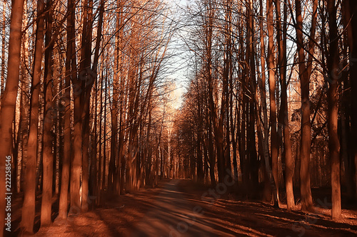 landscape autumn rays of the sun / beautiful landscape nature of Indian summer, yellow forest and sun