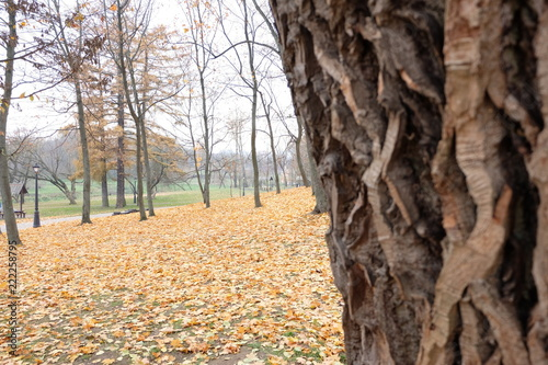 Keuken foto achterwand Schip Autumn in Minsk