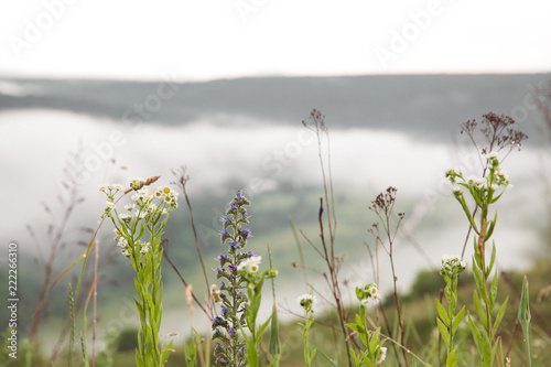 Spoed Foto op Canvas Natuur Close-up the flowers against the background of the fantastic view of nature in the fog