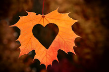 Heart In Autumn Leaf. Fall Dec...