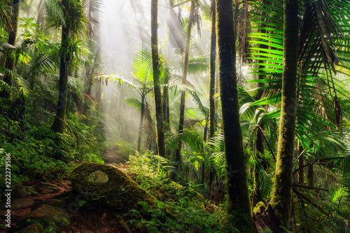 Montage in der Fensternische Karibik Beautiful jungle path through the El Yunque national forest in Puerto Rico