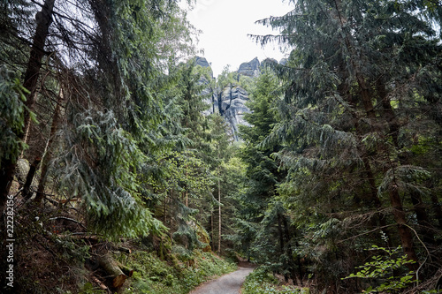 Poster Khaki pathway and green trees in european forest in Bastei, Germany