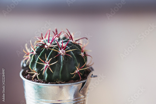 Spoed Foto op Canvas Cactus Cactus dans un petit pot en métal