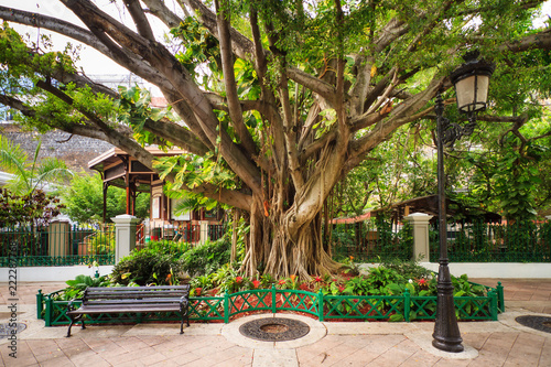 Foto op Plexiglas Caraïben Urban cityscape of old San Juan, Puerto Rico, with an ancient tree, a lantern and a bench