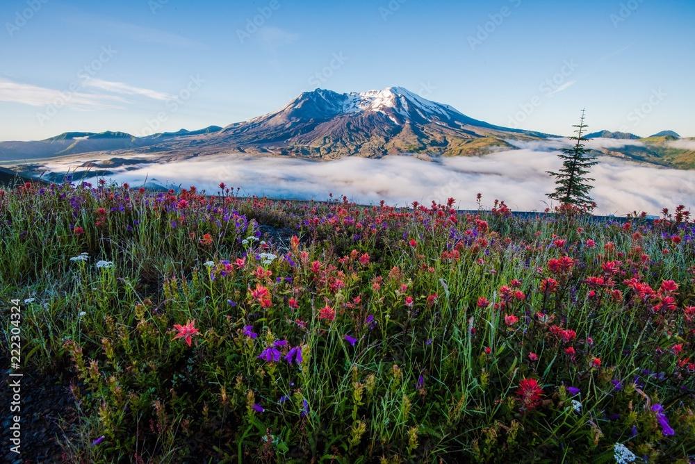 Fototapety, obrazy: Mount St Helens in Summer