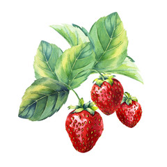 Panel Szklany Do jadalni watercolor strawberry branch