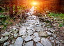 Stone Paved Road In Forest