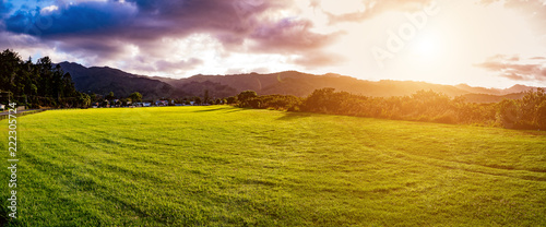 Deurstickers Honing New Zealand green field sunrise