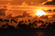 Silhouette of tropical palm trees and the sun setting during a beautiful sunset in the Caribbean in San Juan, Puerto Rico