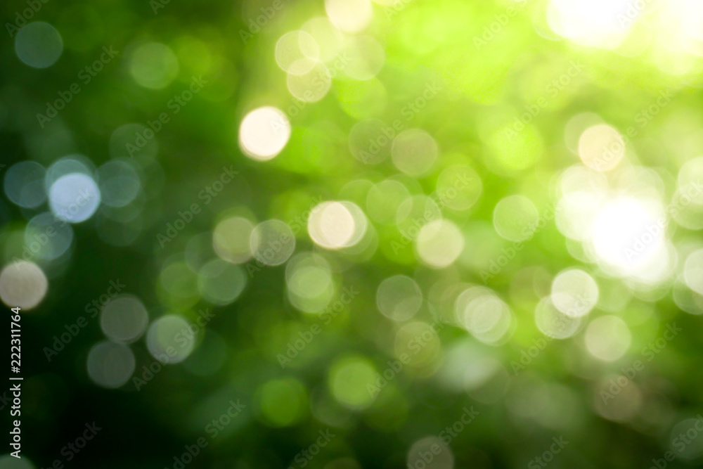 Fototapeta Sunny abstract green nature background, Blur park with bokeh light , nature, garden, spring and summer season