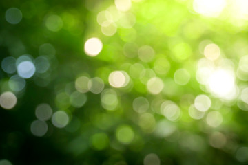 Sunny abstract green nature background, Blur park with bokeh light , nature, garden, spring and summer season