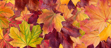 Background Of Autumn Leaves. A...