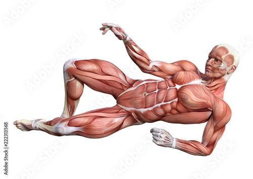 Obraz na plátně  3D Rendering Male Anatomy Figure on White