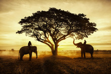 Thailand Countryside; Silhouet...
