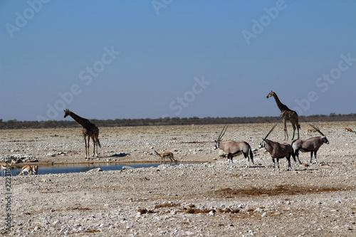 Staande foto Afrika Wasserloch in der Steppe von Namibia