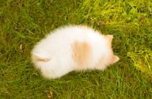 Dog - Fluffy Pomeranian Puppy ...