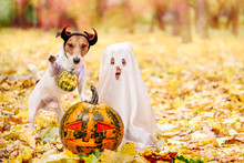 Kid And Dog Dressed In Hallowe...