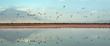 canvas print picture - Colony of Flamingos on the Natron lake. Lesser Flamingo Scientific name: Phoenicoparrus minor. Flamingos in the water near the shore of Lake Natron. Colony of flamingos. Panorama. Tanzania.