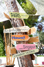 World Travel Direction Signs On Tree