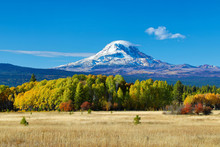 Mt Adams And Aspen Trees In Th...