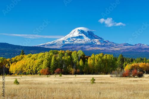 Obraz na plátně Mt Adams and aspen trees in the fall
