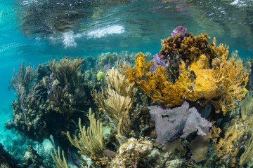 Healthy Coral Reef on Edge of Blue Hole