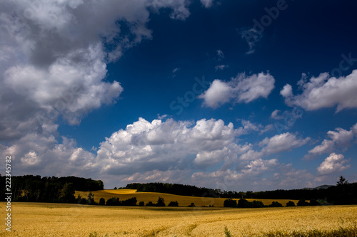 Foto op Aluminium Nachtblauw Summer landscape with fiel and forest