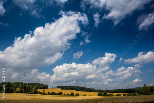 Spoed Foto op Canvas Nachtblauw Summer landscape with fiel and forest