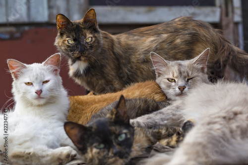 Fotografie, Obraz  flock of stray cats lying on the street