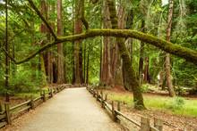Trail At Big Basin Redwood Sta...