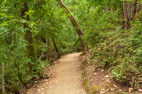 Fotografía  Hiking trail path in the forest of Big Basin Redwood State Park in California