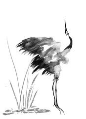 Fototapeta Do jadalni Japanese crane bird drawing. Watercolor and ink illustration in style sumi-e, u-sin, go-hua Oriental traditional painting. Isolated .