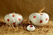 White Pumpkins Decorated With Red Ladybugs On The Hay