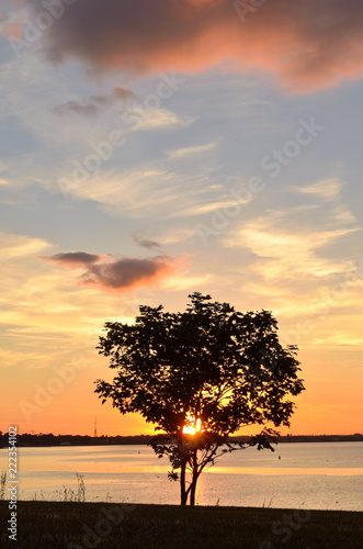 Photo  Tree silhouetted against the setting sun
