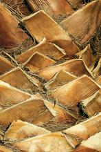 Palm Tree Trunk Closeup