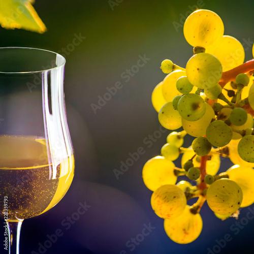 Weintrauben und Weißweinglas