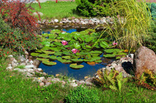 Beautiful Garden Pond