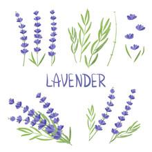 Set Of Watercolor Lavender Flower Elements. Vector Illustration.