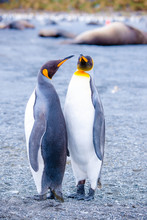 Beautiful Shots Cute Penguins Antarctica Snow