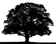 Black And White Oak Tree Silho...