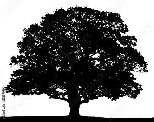 Black and white oak tree silhouette isolated on white background. Wallpaper Mural