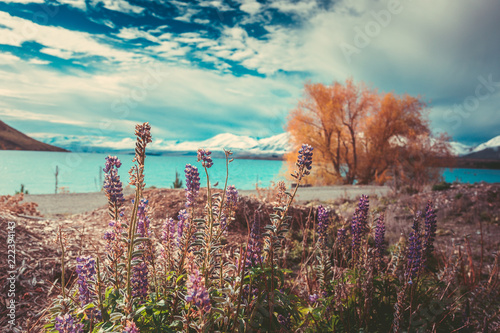 Tuinposter Cappuccino Autumn in Lake Tekapo, New Zealand landscape