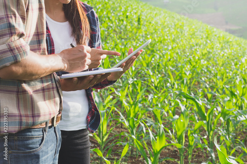 Photo Agronomist examining plant in corn field,  Couple farmer and researcher analyzing corn plant