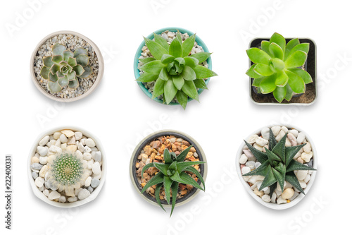 Foto auf AluDibond Kakteen Top view of small cactus isolated on white background