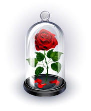Red Rose Under The Dome On White Background