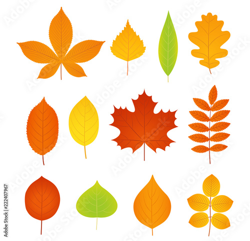 Autumn Leaves Vector Fall Leaf Symbol Set Leaves From Different Kind Of Trees Isolated On White Background Natural Colorful Cartoon Flat Style Illustration Acquista Questo Vettoriale Stock Ed Esplora Vettoriali Simili