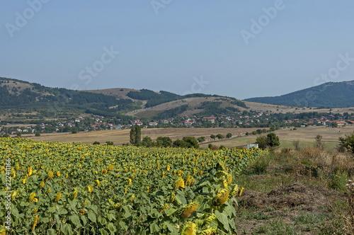 Foto  Scene with sunflower field in front and view toward  Bailovo village, Sredna gor