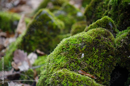 Fotografie, Obraz  Moss-covered stone