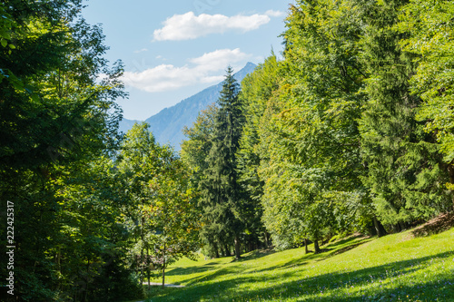 Landschaft Wald Alpen